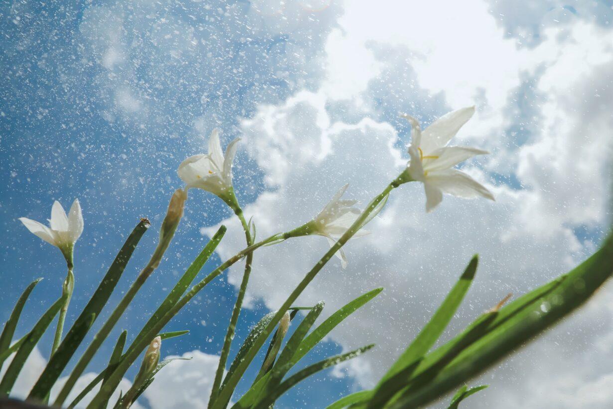 sometimes-snow-april-prince