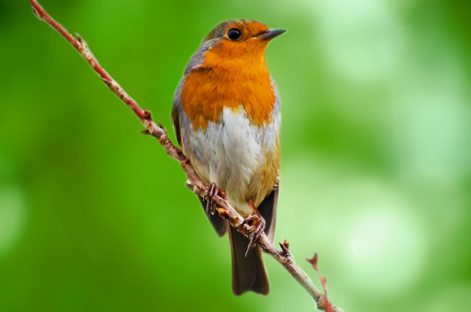 De vogels fluiten weer! Hoe klinken ze in de bijbel?